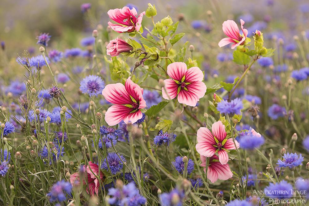 Blüten, Wiesen & Felder