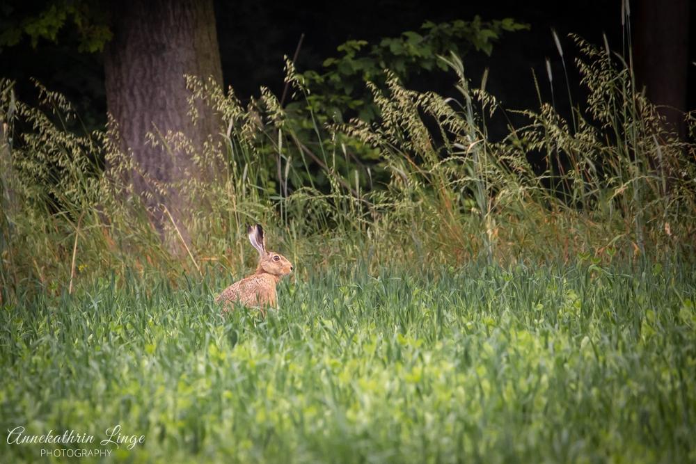 Wildlife Thüringen