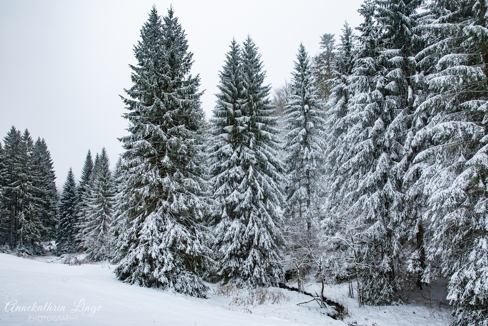 Winterspaziergang II