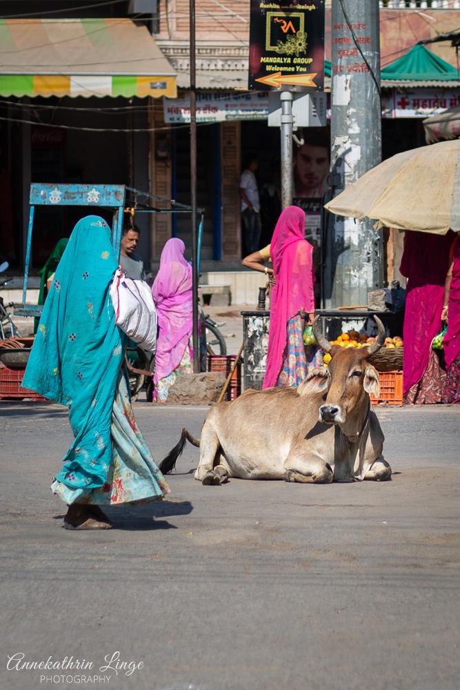 unterwegs in Rajasthan