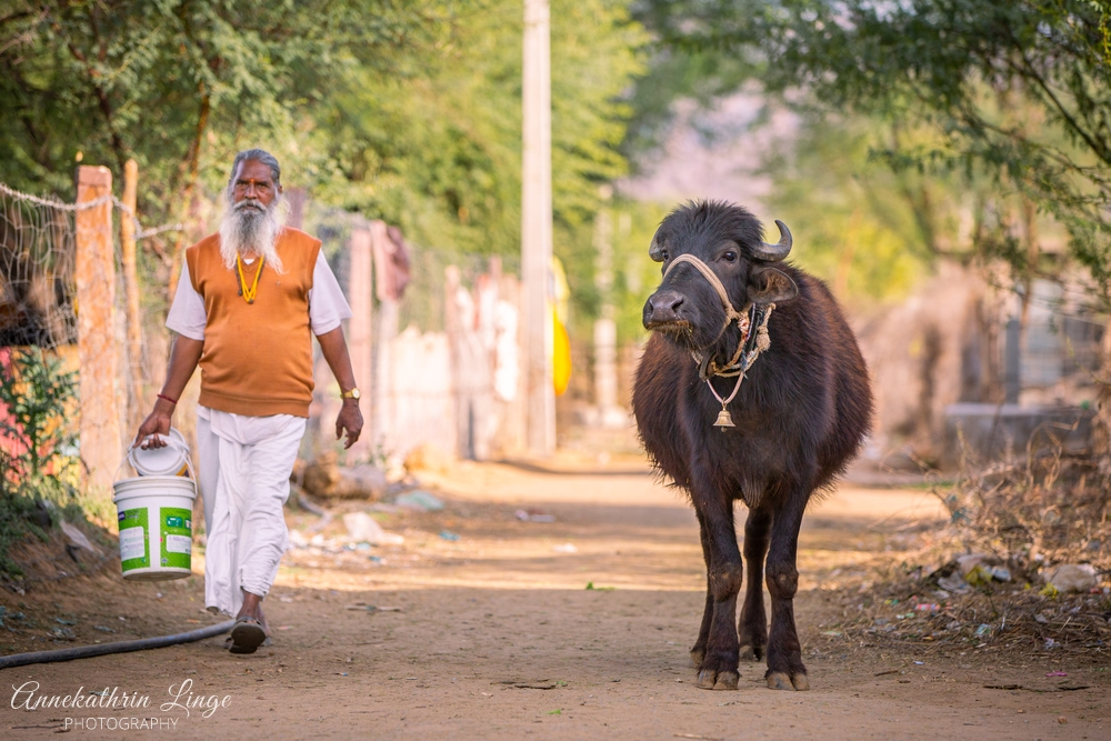 Indien / Rajasthan: unterwegs & Ranthambhore-Nationalpark
