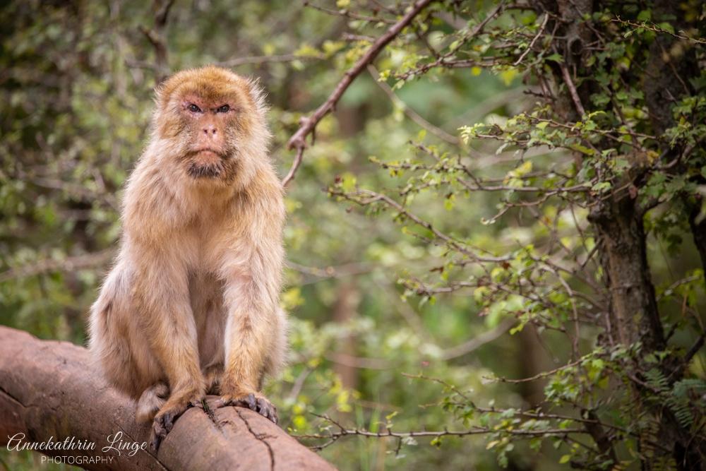 Thüringer Zoopark Erfurt