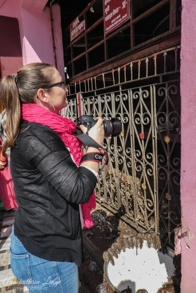 2020: im Karni Mata-Tempel auf der Suche nach einer weißen Ratte (Indien)