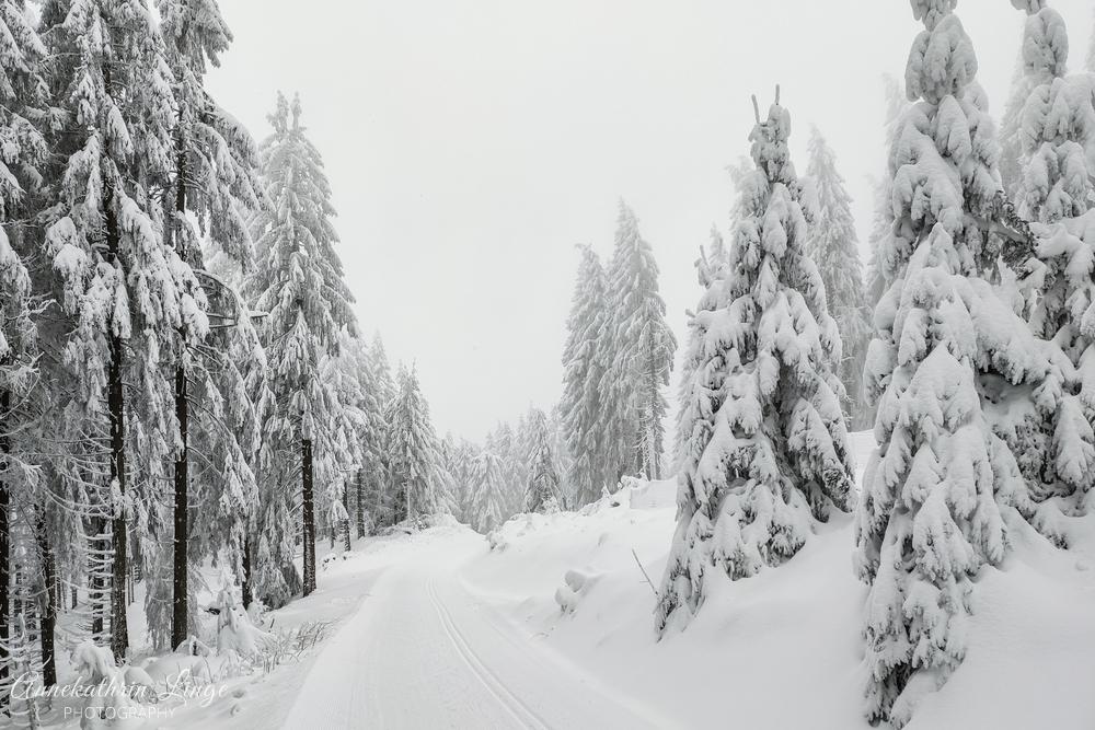 Thüringer Wald - Winter 2020